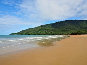 plages tropicales daintree national park